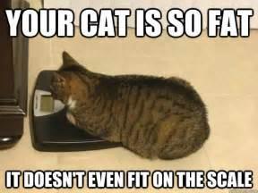 cat scale me cat memes quickmeme
