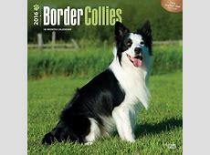 Border collie Calendrier 2017 Acheterle sur Europostersfr