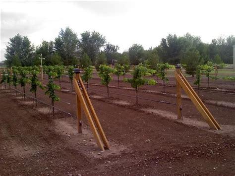 grape vine trellis design pin by paula cole on garden pinterest