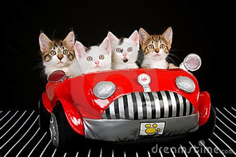 cute kittens  red soft toy car stock images image