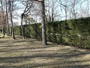 Les Jardins Du Sud : taille et entretien des arbres et arbustes d 39 ornement ~ Melissatoandfro.com Idées de Décoration