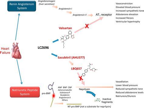 combined neprilysin  renin angiotensin system