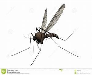 Stechmücke Im Zimmer : stechm cke mit extra langem stachelschwanz gesundheit stechm cken ~ Bigdaddyawards.com Haus und Dekorationen