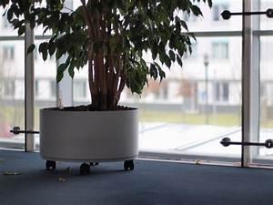 Arbre D Intérieur : les arbres d 39 int rieur marie claire ~ Preciouscoupons.com Idées de Décoration