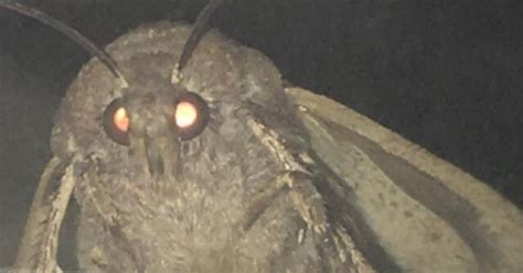 moth lamp meme heres