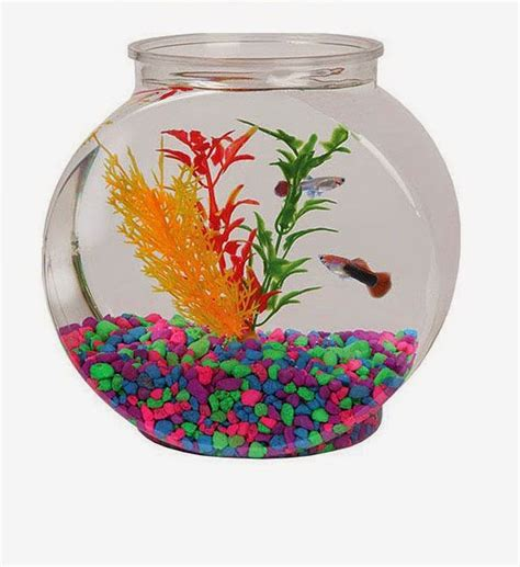 bowl ideas cool glass fish bowl decorations ideas and tips