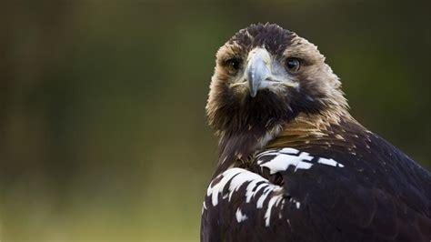 Fotografías Reportajes Y Fotografías De águilas En National Geographic