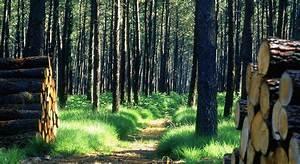 Foret à Bois : bois for ts les transactions d passent le milliard le revenu ~ Nature-et-papiers.com Idées de Décoration
