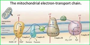 What Role Does Oxygen Serve In The Process Of Cellular
