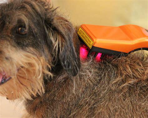lasertherapie fuer hunde tierheilpraxis fuer hunde