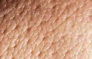 How Skin Pores Work
