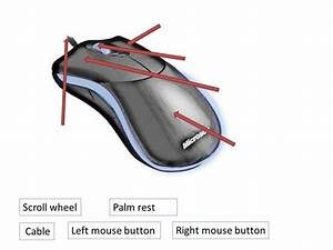 The Mouse And Touchpad