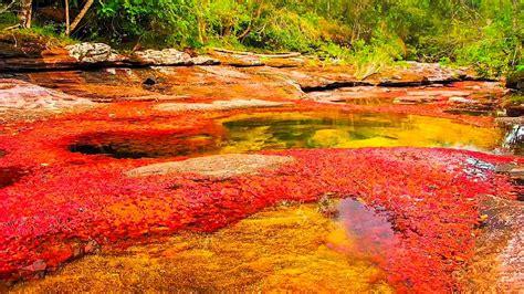 river colors kaleidoscopic ca 241 o cristales river of five colors