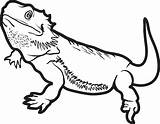 Lizard Coloring Printable sketch template
