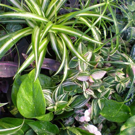 plante dans chambre jardins bleus plantes vertes