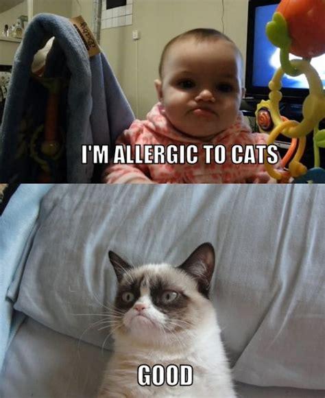 Grumpy Cat Best Meme - top 25 grumpy cat memes cattime