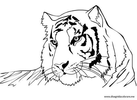 tigre da disegnare per bambini disegno tigre disegni da colorare