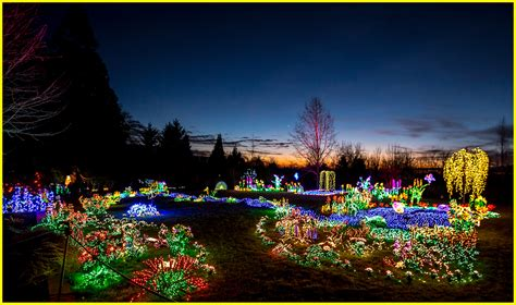 sunset at bellevue botanical garden lights the annual