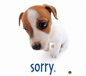 """Sorry"" Dog Cute College Dorm Room Poster - Funny college"