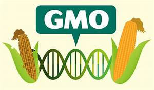 Here U0026 39 S Everything You Need To Know About Gmo Crops