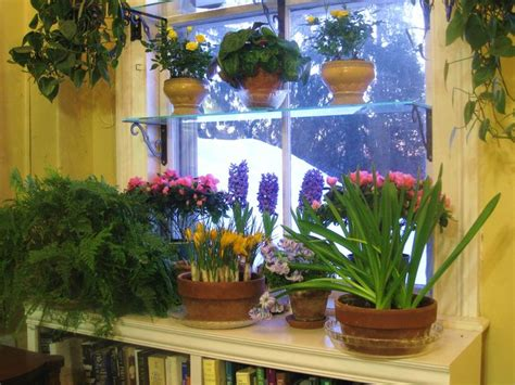 Best 25+ Indoor Window Garden Ideas On Pinterest