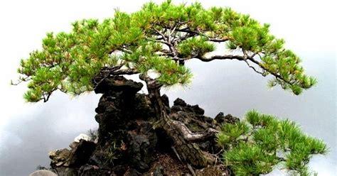 mpv landskap nurseri pokok tanaman sesuai