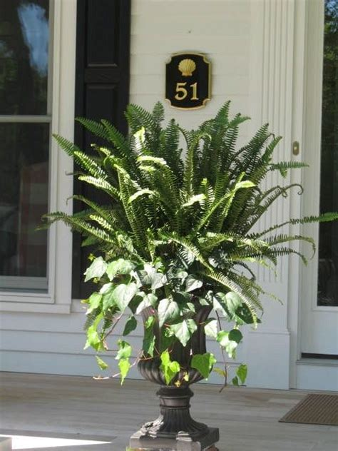 Best 25+ Front Porch Plants Ideas On Pinterest  Deck. Metal Nightstand. Multi Panel Mirror. How To Decorate A Coffee Table. La Mantia. Small Shower Ideas. Zebra Print Chair. Grey Color Palette. Large Window Treatments