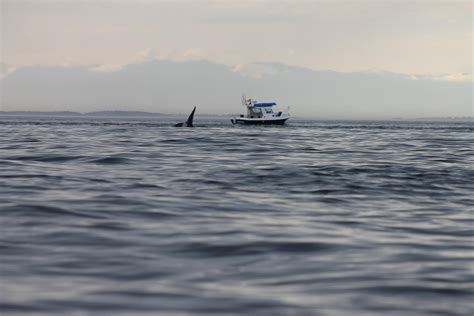 san juan island sea kayaking smallpox bay  deadman bay