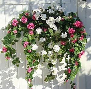 Blumenkübel Bepflanzen Sommer : balkonkasten bepflanzung rosa wei ~ Eleganceandgraceweddings.com Haus und Dekorationen