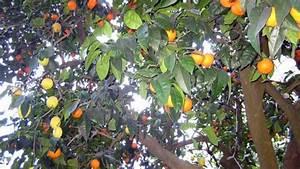 Arbre A Fruit : l arbre salade de fruits ~ Melissatoandfro.com Idées de Décoration