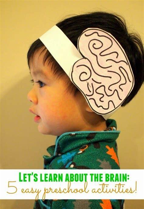 lets learn   brain preschool science activity