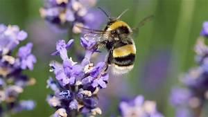 10 Easy Ways To Help Bees In Your Garden