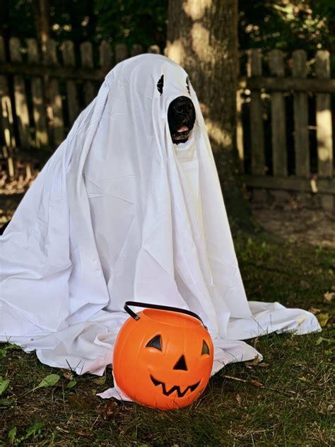 newfoundland  corgi dress   ghosts  brown newfies