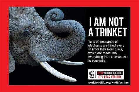 brilliant ads  fight animal cruelty takepart