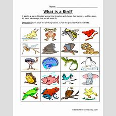 Resource  Science  Bird Classification Worksheet