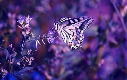 Kupu Cantik Gambar
