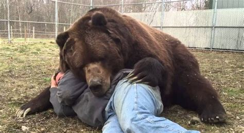 anni fa trovo questo orso orfano guardate