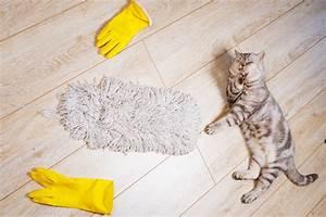 Katzenurin Geruch Entfernen Laminat : katzenurin geruch von laminat entfernen das hilft ~ A.2002-acura-tl-radio.info Haus und Dekorationen
