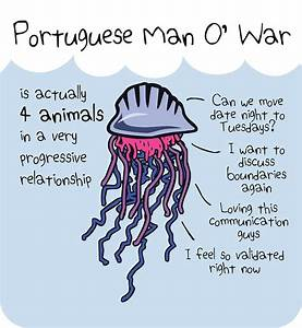 U0026quotportuguese Man Ou002639 War Is Actually 4 Animals In A Very