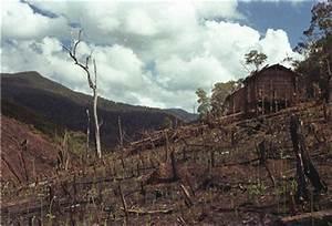 Succession/Human Impact - Zahamena National Park