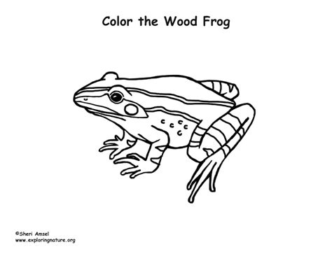 wood frog coloring nature