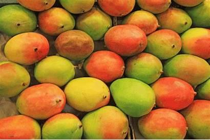 Mangoes Esters Mango Uses Pineapple Ng Fab