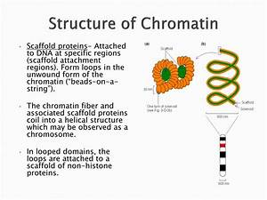 Ppt - Structure Of Chromatin Powerpoint Presentation