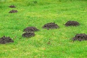 Mäuse Im Garten Vertreiben : ameisen im garten vertreiben statt vernichten husmann garten und landschaftsbau gmbh ~ Whattoseeinmadrid.com Haus und Dekorationen