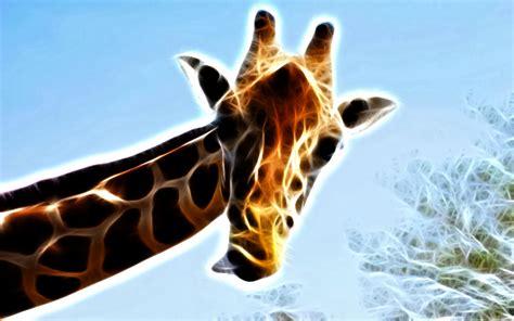 Fractal Animal Wallpaper - fractal animal wallpaper pictures to pin on