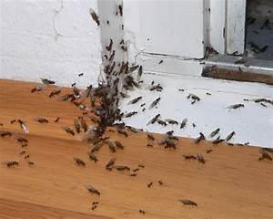 Ameisen Im Haus Woher : ameisenfallen ungeziefer im haus ~ Lizthompson.info Haus und Dekorationen