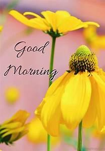 Good Morning Images, Full Top Hd Good Morning, #29120