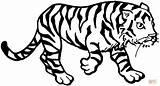 Colorare Disegni Tigre Tiger Coloring Tutorial sketch template