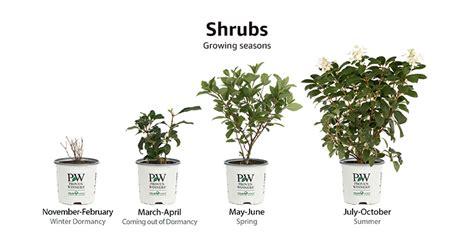images of shrubs plants amazon com live plant patio lawn garden