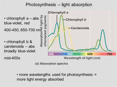 Lecture 3 Outline (ch. 8) Photosynthesis Overview